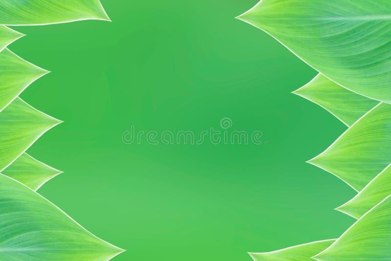 Красивые лист зеленого цвета рамки границы природы стоковая фотография