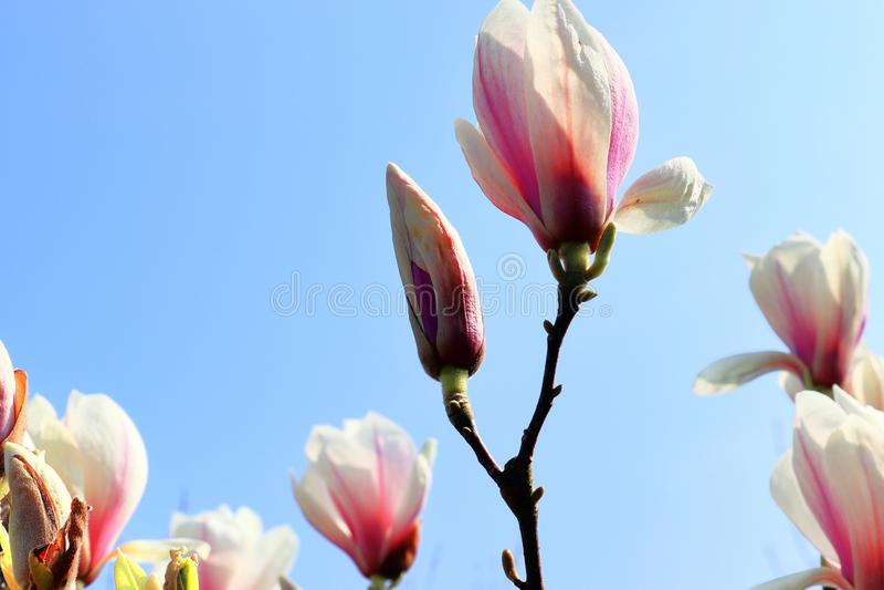 Красивые и красочные зацветая деревья перед голубым небом стоковые фотографии rf