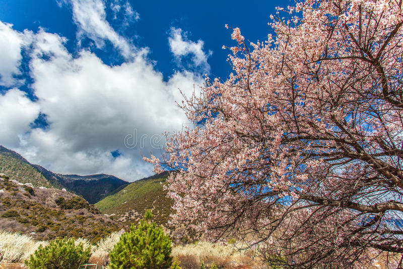 Красивые и красочные цветения персика перед moutains стоковые изображения