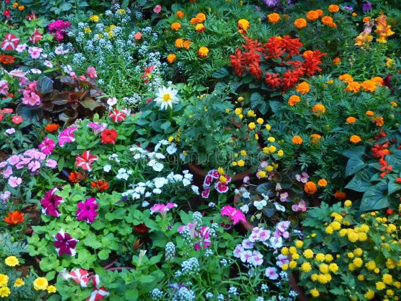Красивые и яркие цветки-Ii выставки стоковые фотографии rf