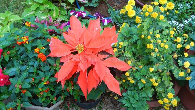Красивые и яркие цветки-III выставки стоковое фото rf