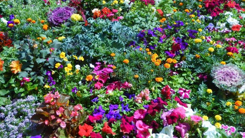 Красивые и яркие цветки-IV выставки стоковая фотография rf