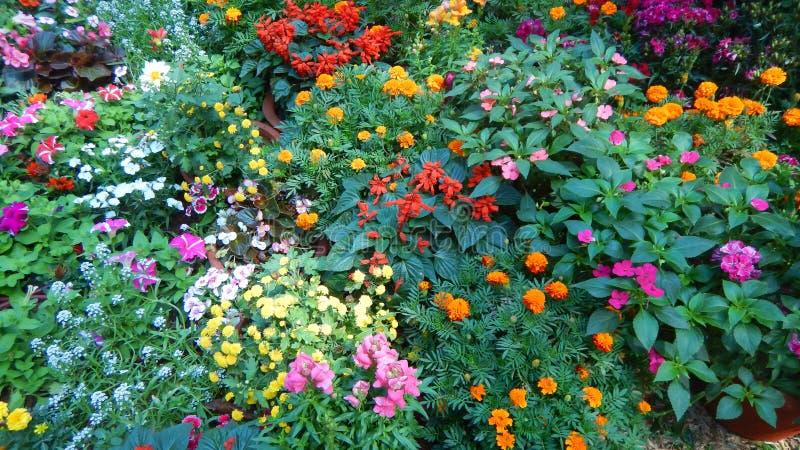 Красивые и яркие цветки-V выставки стоковая фотография