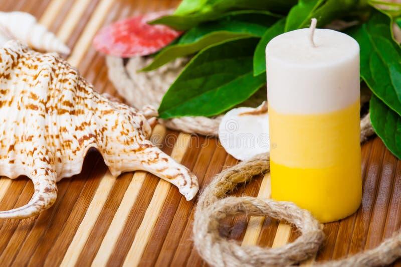 Красивые конец-вверх seashells и cand ароматерапии стоковое фото