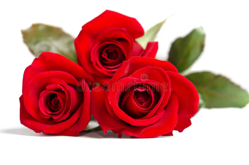 Красивые 3 красной розы стоковое изображение rf