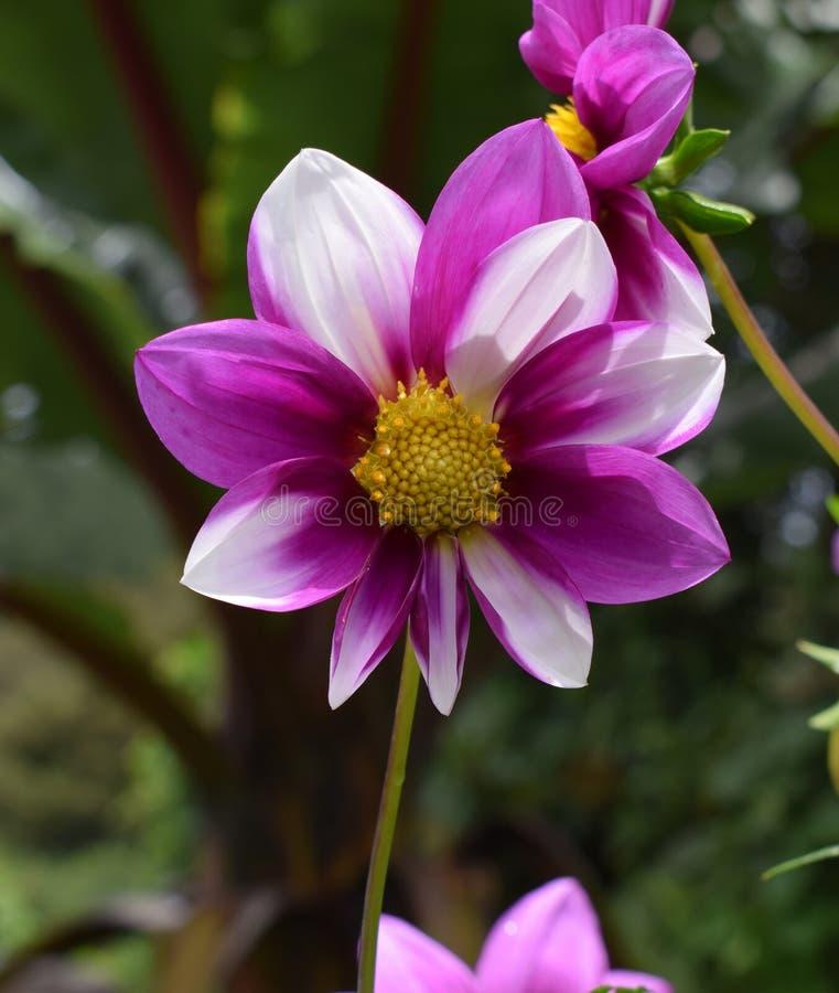 Красивые красочные лепестки цветка стоковые фотографии rf