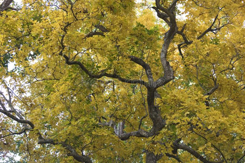 Красивые красочные листья листьев осени, желтых и зеленых стоковая фотография