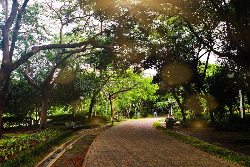 Красивые красочные цветки и зеленый лес дерева завода природы в сквере и зеленые парки города стоковые изображения