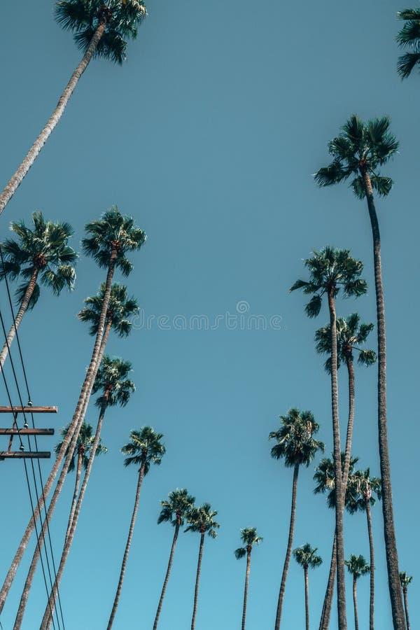 Красивые ладони Лос-Анджелеса во время горячего летнего дня стоковое изображение rf