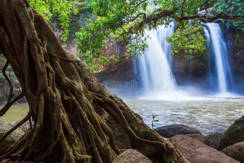 Красивые ландшафт водопада в тропическом лесе, яркий и нежно водопада в утре Khao Yai, Таиланд стоковое изображение