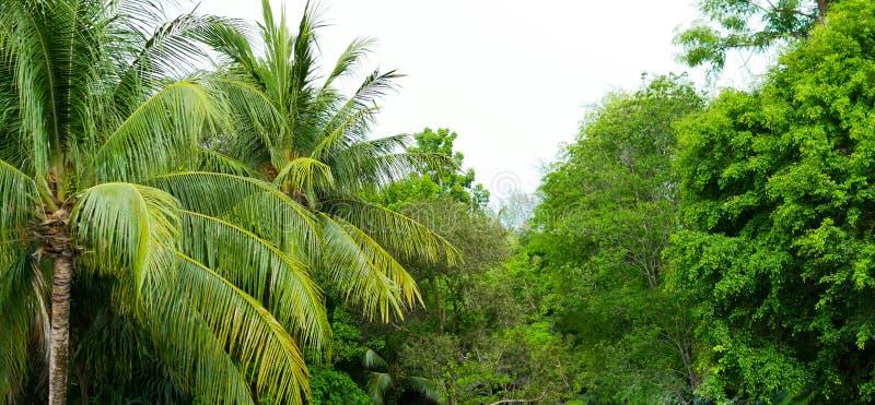 Красивые ландшафт и природа дождевого леса в Пхукете, Таиланде Прекрасное место для перемещения и ослаблять в лесе стоковое фото rf