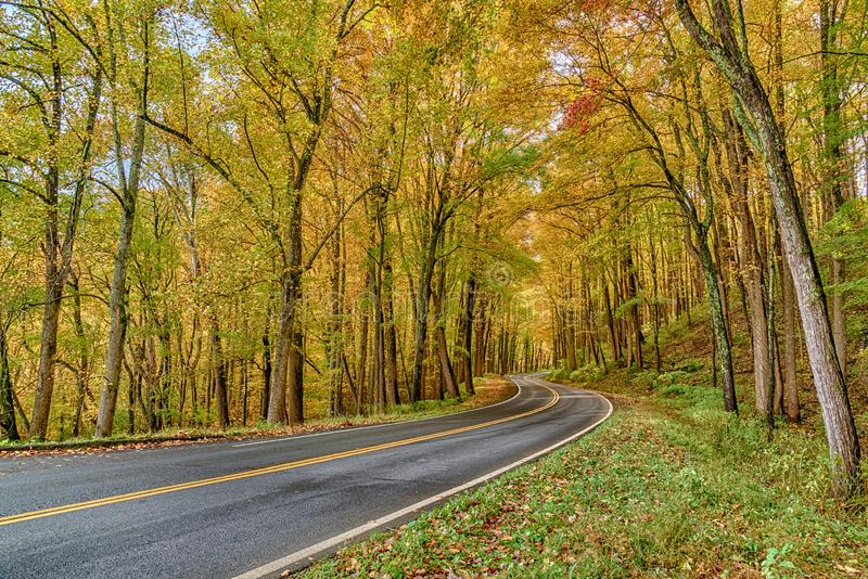 Красивые листья осени в закоптелых горах стоковые изображения rf