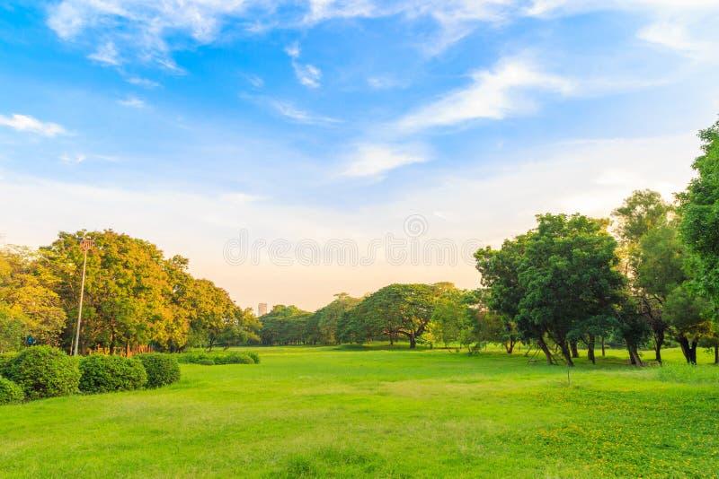 Красивые лужайка и деревья в парке с облаками и голубым небом стоковые изображения rf