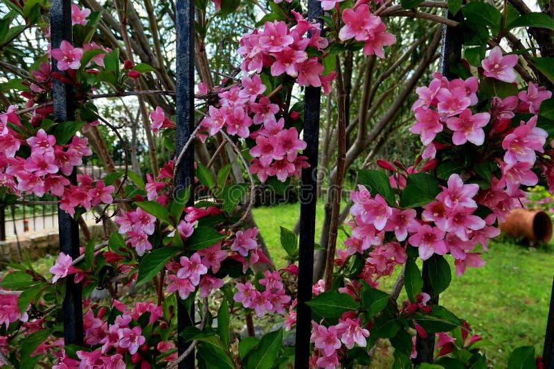 Красивые маленькие цветки пинка закрывают вверх стоковое изображение rf