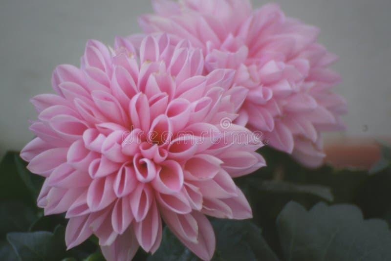 Красивые малые цветки в сенсационных цветах Природа пышна - Вид спереди - горизонтальное визирование взгляда стоковые изображения rf