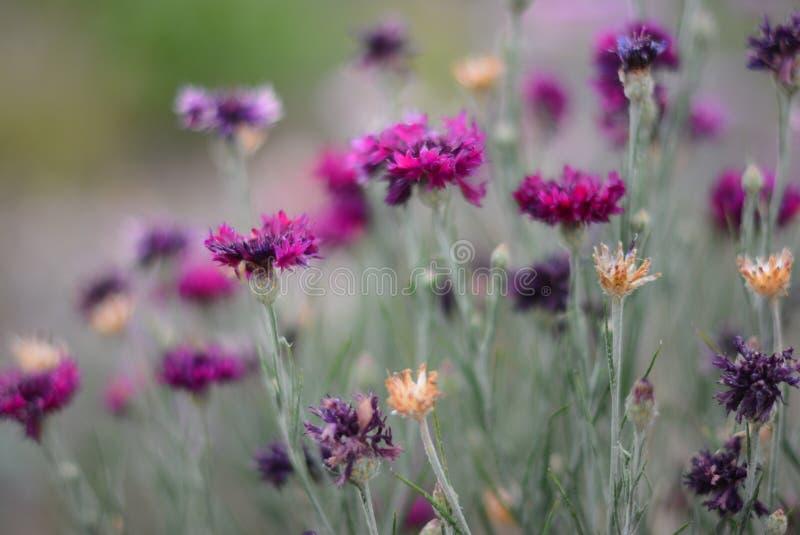 Красивые милые цветки дорогой стоковая фотография rf
