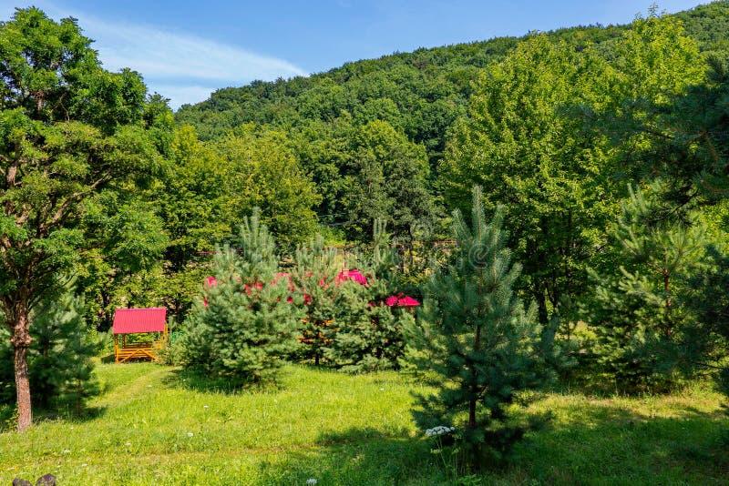 Красивые молодые ели засаженные на зеленом glade с прятать между ими крыши беседок и домов стоковые фото