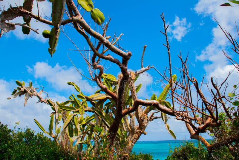 Красивые морская вода и кактус бирюзы залива пляжа holguin Кубы стоковое фото rf