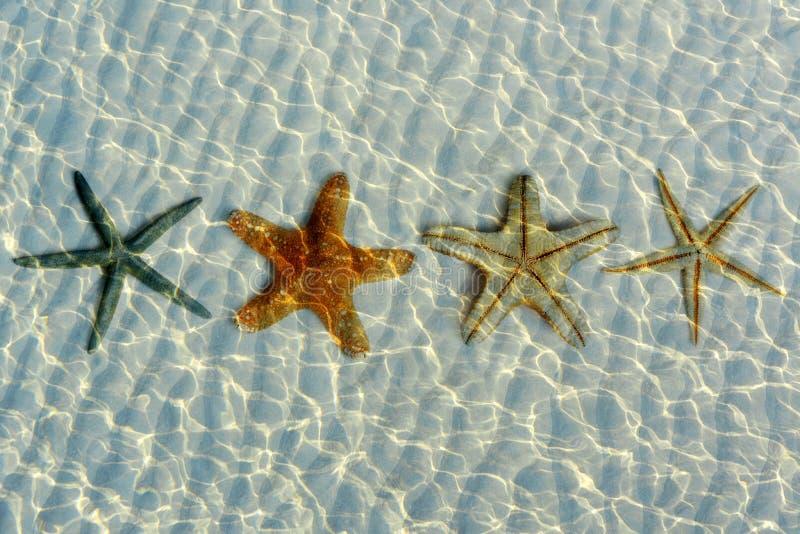 Красивые морские звёзды под водой стоковое изображение