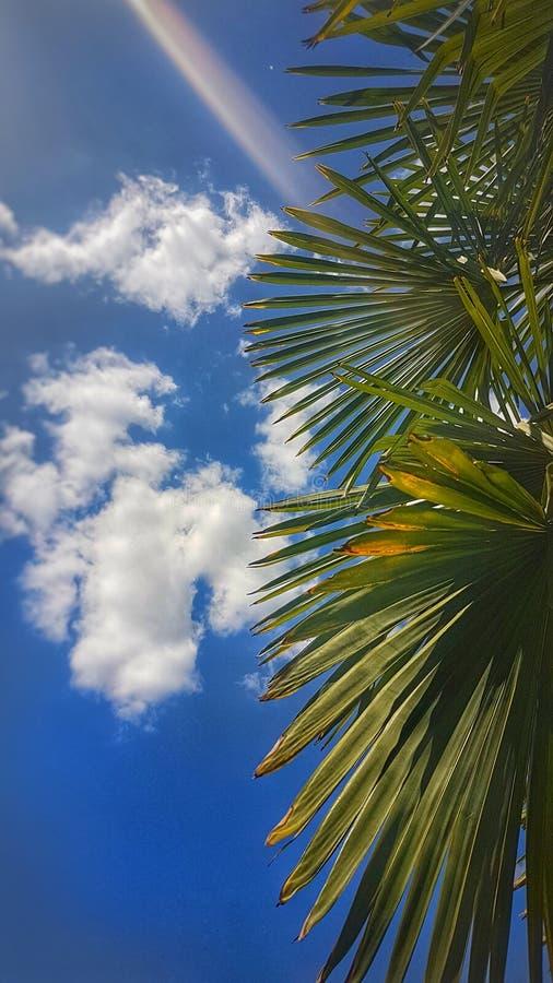 Красивые небо и ладонь стоковые фотографии rf