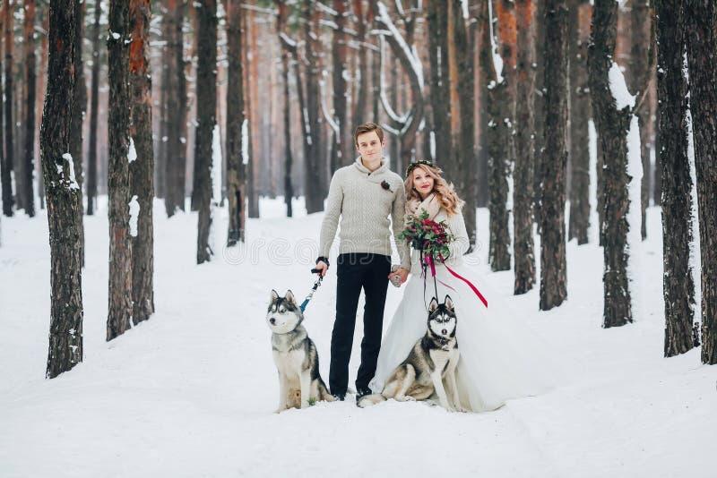 Красивые новобрачные с сибирской лайкой 2 представлены на предпосылке снежного художественного произведения леса стоковое фото rf