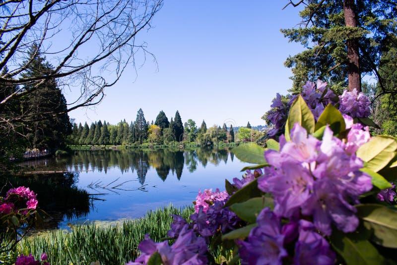 Красивые озеро и цветки стоковое изображение rf