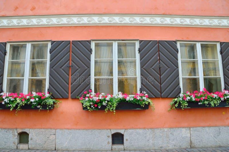 Красивые окна и цветочные горшки стоковое фото rf