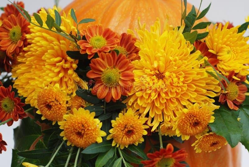 Красивые оранжевые цветки crisanthemum в тыкве осени конец вверх белизна осени изолированная принципиальной схемой стоковая фотография rf