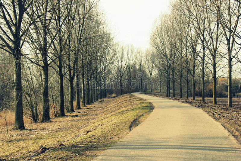 Красивые дорога и деревья стоковые изображения rf