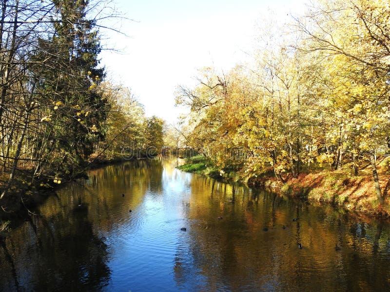 Красивые осенние деревья возле рек, Литва стоковое фото