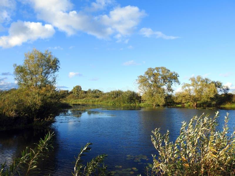 Красивые осенние деревья возле рек, Литва стоковые фотографии rf