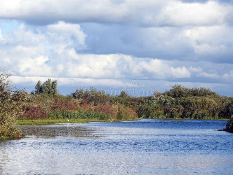 Красивые осенние деревья возле рек, Литва стоковое изображение