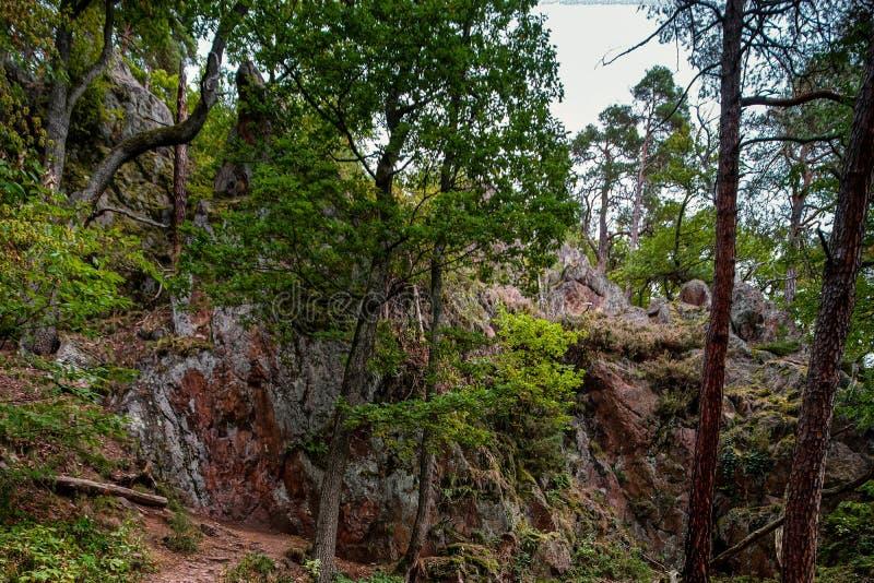 Красивые осенние детали леса, естественный ландшафт стоковое фото