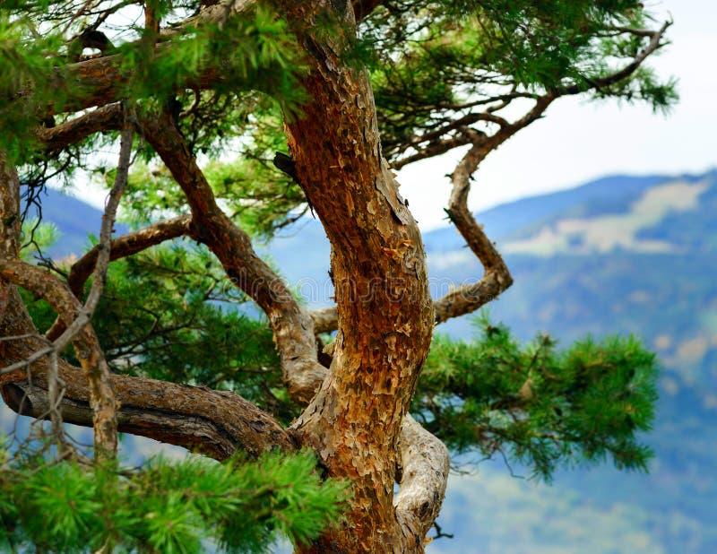 Красивые осенние детали леса, естественный ландшафт стоковые фото