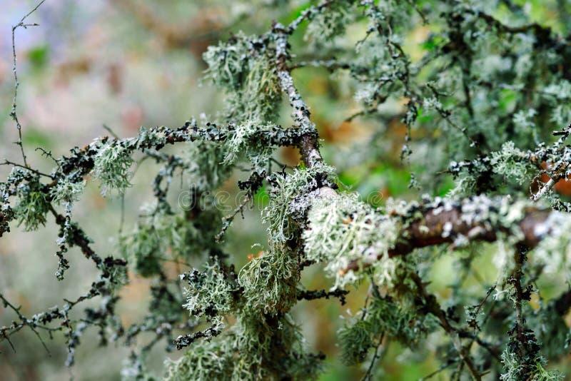Красивые осенние детали леса, естественный ландшафт стоковые изображения