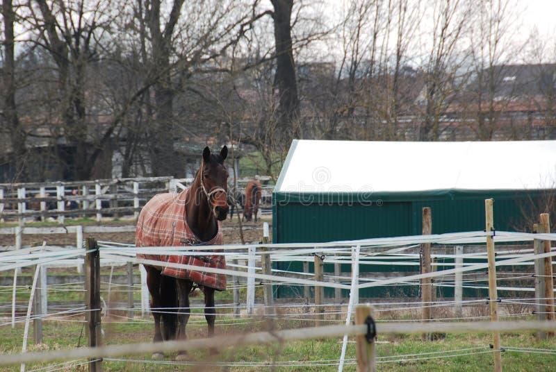 Красивые лошади, hurdler стоковые изображения