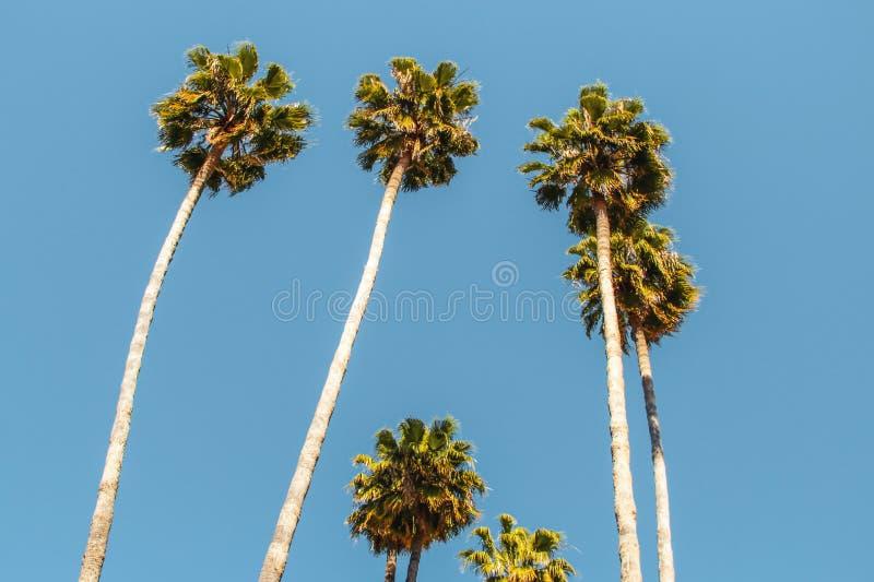 Красивые пальмы в ясном голубом небе стоковое изображение rf