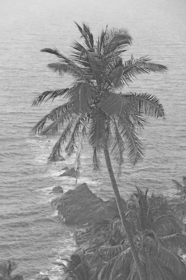 Красивые пальмы на предпосылке моря и солнца Пальмы на предпосылке захода солнца Тропический и экзотический ландшафт стоковая фотография rf