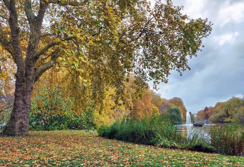 Красивые пейзаж и листва осени стоковая фотография rf