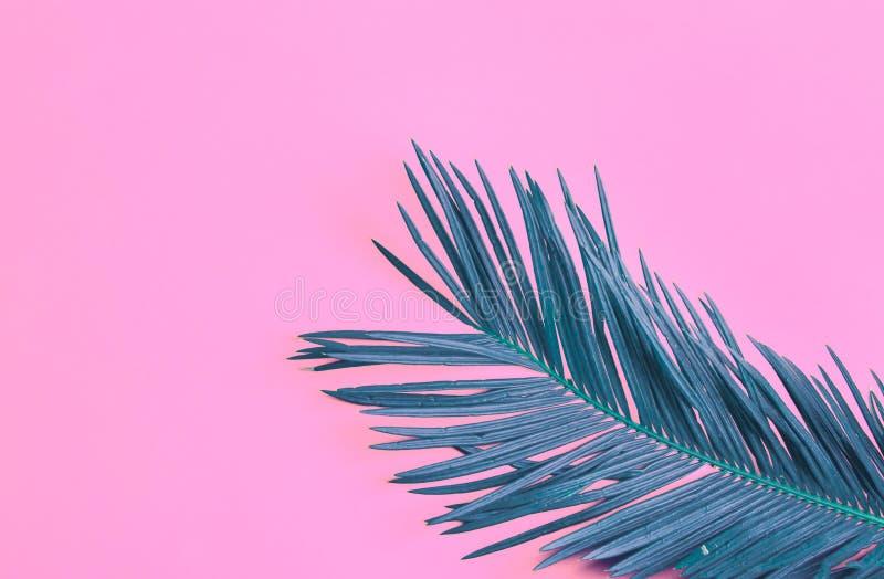 Красивые пернатые лист ладони teal на живой неоновой розовой предпосылке Концепция лета тропическая творческая Городские комнатны стоковые изображения