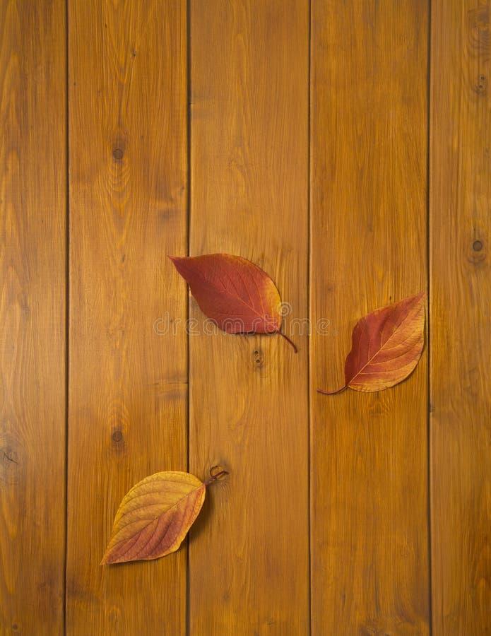 Красивые пестротканые листья на деревянных досках стоковая фотография
