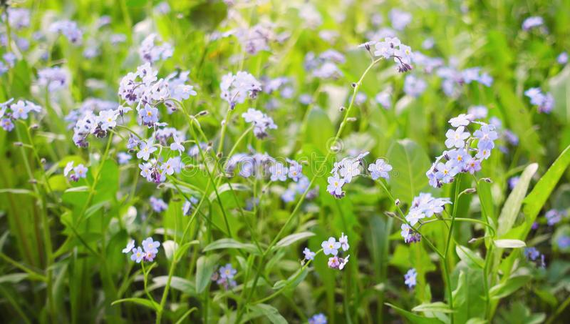 Красивые полевые цветки в поле лета стоковая фотография rf