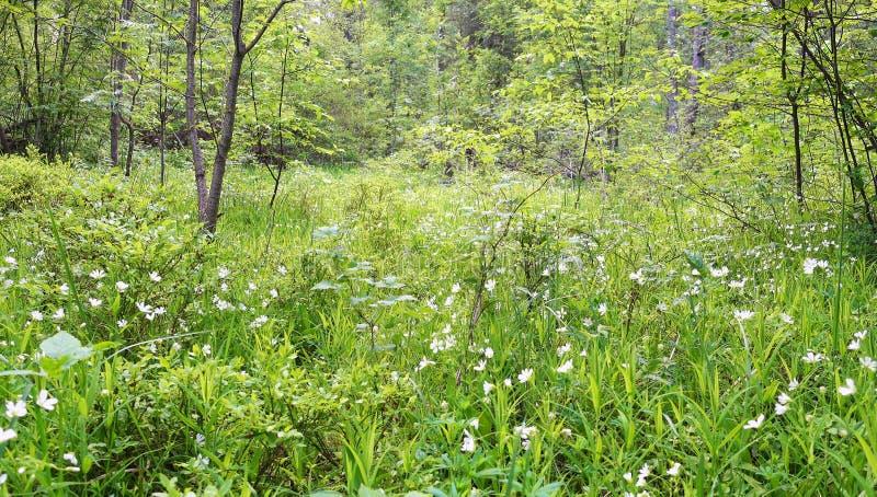Красивые полевые цветки и трава в glade леса стоковое изображение rf