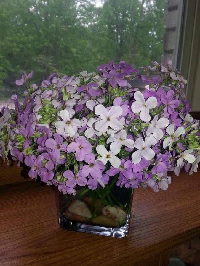 Красивые полевые цветки в нашем фронте стоковое фото rf