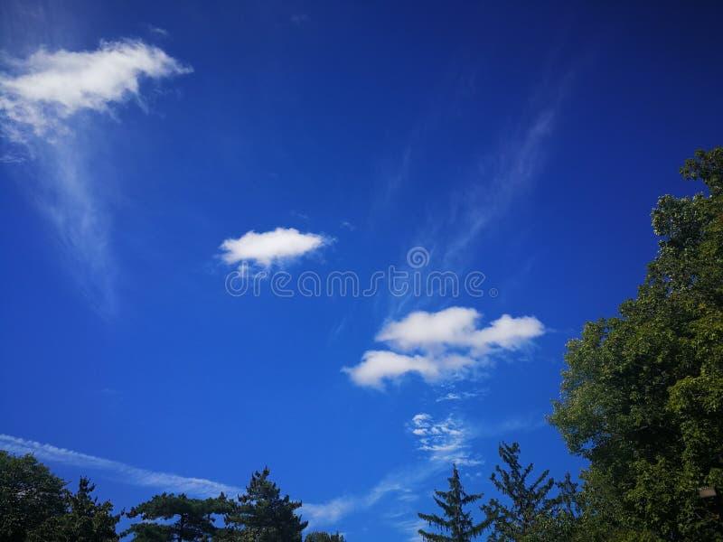 Красивые пушистые белые небольшие белые облака в темносинем небе над деревьями зеленого цвета леса стоковая фотография