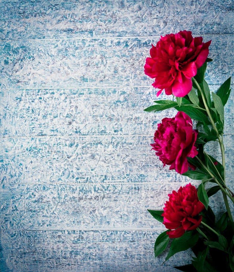 Красивые розовые красные цветки пиона marsala на замороженном деревянном столе с космосом экземпляра для ваших взгляд сверху текс стоковые изображения rf