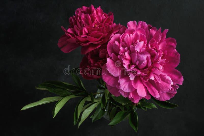 Красивые розовые пионы на темной предпосылке флористическая жизнь все еще стоковые фотографии rf