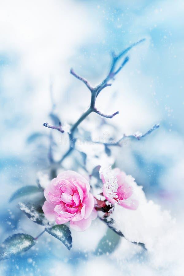 Красивые розовые розы в снеге на голубой предпосылке snowing Художническое изображение зимы стоковое изображение rf