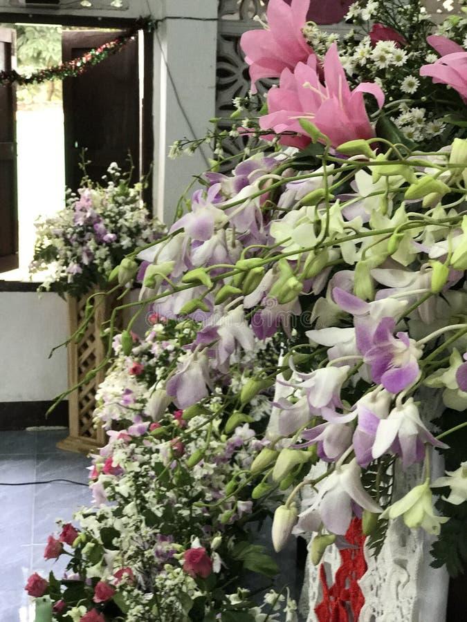 красивые розовые & фиолетовые цветки стоковые изображения rf