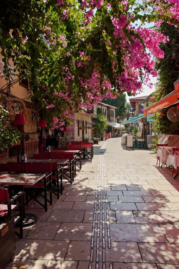 Красивые розовые цветки в улице старого городка Kaleici в Анталье стоковые изображения rf